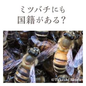 ミツバチにも国籍がある?