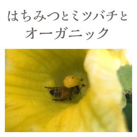 はちみつとミツバチとオーガニック